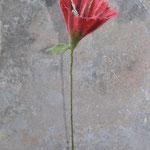 Blume Nr. | Flower No. 60 |   20 €   | ca. 30 cm