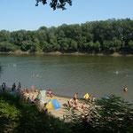 Baignade dans la Tisza