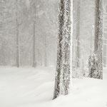 Ciaspolando nel bosco (Lac Blanc, parco naturale dei Vosgi Marzo 16)