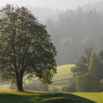 Mattinata serena (Alpi Giulie)
