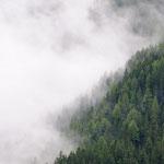 I boschi delk monte Casella tra le nuvole