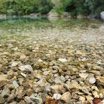 Gambero di fiume (lago del Cornino)