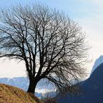 Albero a Lajon (Val Gardena)