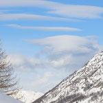 Larice e nuvole
