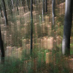 Emozioni nel bosco (Alpi Giulie)