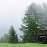 La nebbia sui prati