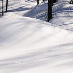 Impronte nel bosco