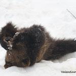 Spatasciato nella neve