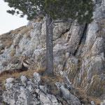 Camoscio (passo Valparola)