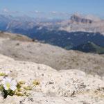 Fiore sul ghiaione
