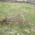 Der erlegte Baum :D