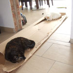 Die Katzen chillen auf dem Ikea-Karton