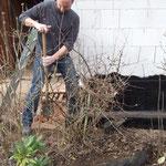 Pflanzen ausgraben in Nachbars Garten