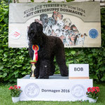 """Russicher Schwarzer Terrier Hündin """"Arkadija-Assya Chornaya-Ten"""""""