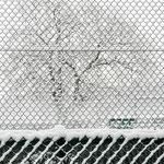 Winter Net 1 by Marcel Haag