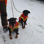 Unsere beiden mit Hundeschutzwesten