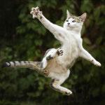 Tanja Zech - Kung Fu Cat
