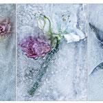 Tanja Zech - Serie Frozen Flowers