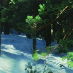 bosque con filtraciones solares 1, 2005. óleo sobre tabla 50x200 cm. forest with sun light 1, 2005. oil on panel 19,5x78 inches