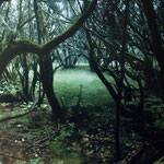 bosque verde, 2009. óleo sobre tabla 70x100 cm. green forest, 2009. oil on panel 27,3x39 inches