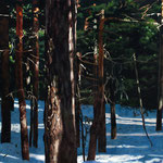 bosque con filtraciones solares 2, 2006. óleo sobre tabla 50x200 cm. forest with sun light 2, 2006. oil on panel 19,5x78 inches