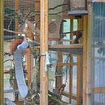 Eichhörnchenauffangstation