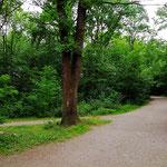 Truderinger Wald