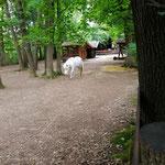 Akademie für Tierschutz