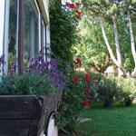 Sommer im Innenhof