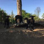 April 2020: Der Jurabock hat lauter schwarzen Nachwuchs produziert!