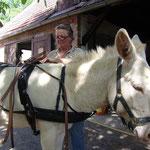 Andrea Dobretsberger hilft uns, die Esel einzufahren. Hier Leon bei der Anprobe.