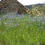 Eine Blühwiese vor dem Erdkeller