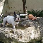 Nero ist immer wieder Gast bei uns und hat das Becken für sich entdeckt.