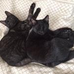 2020: unsere zwei neuen Katzen, geboren am 1.9.2019, fangen schon mit 6 Monaten mehrere Mäuse am Tag.