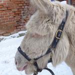 Romeo mit seinem Winterkuschelfell