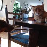 Max, der Kater, mißtrauisch beäugt von Xena, der Katzenhasserin