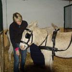 Bei Lukas Swoboda lernen die Esel jetzt vor der Kutsche zu gehen
