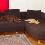 Wenn es ums Auf-dem-Sofa-Schafen geht sind Xena und Max die dicksten Freunde