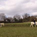 März 2016: Die Esel werden jeden Tag zur Koppel geritten.