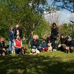 Le groupe école des chiots et quelques adultes de la séance de 9h00