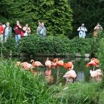 die rosafarbenen Flamingos - das Wahrzeiche des Vogelparks