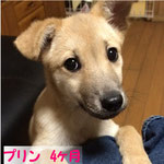 new5/4 NO.409 ユーズ