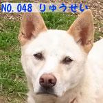 NO.048 りゅうせい