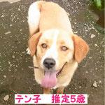 new10/20 NO.043 テン子