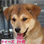 new4/6 ティーズ