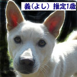2/6更新 NO.197 義