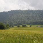 Massifs forestiers