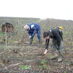 L'équipe Cossy et le travail de la Taille de la vigne.