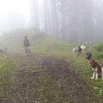 Kurze Ausfahrt mit den Hunden am Sonntag.