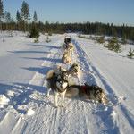 Da wir Zuhause nur in den Bergen und dort oft imTiefschnee unterwegs waren, waren die flachen Weiten in Finnland etwas ganz Neues!